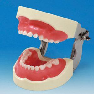 2. Modelos de Odontopediatría
