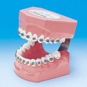 Ortodoncia (ORT)