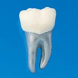 5. Dientes para Ortodoncia
